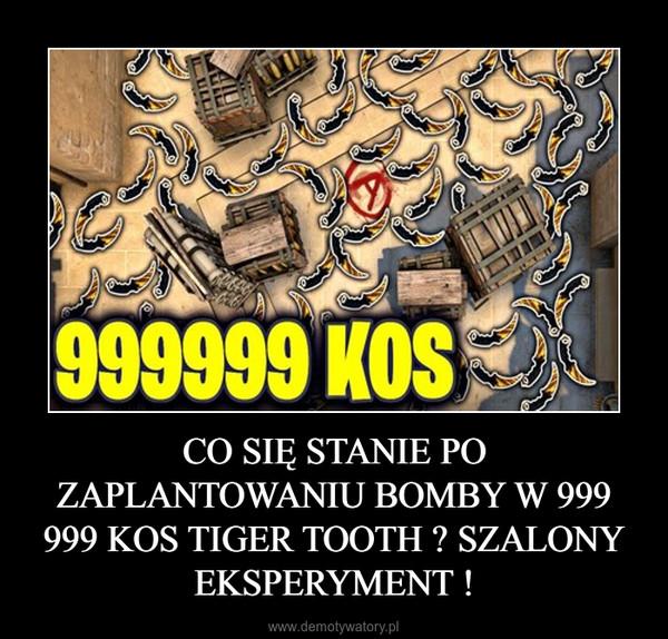 CO SIĘ STANIE PO ZAPLANTOWANIU BOMBY W 999 999 KOS TIGER TOOTH ? SZALONY EKSPERYMENT ! –