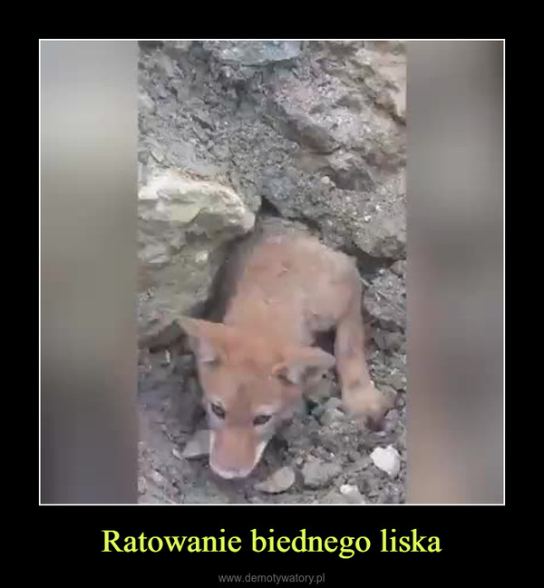 Ratowanie biednego liska –