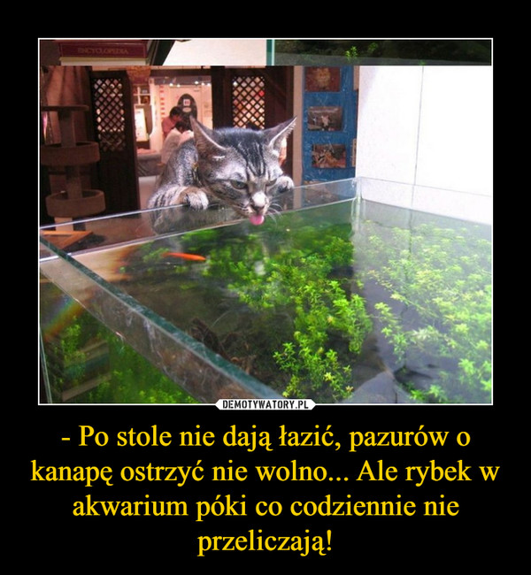 - Po stole nie dają łazić, pazurów o kanapę ostrzyć nie wolno... Ale rybek w akwarium póki co codziennie nie przeliczają! –