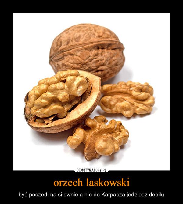 orzech laskowski – byś poszedł na siłownie a nie do Karpacza jedziesz debilu
