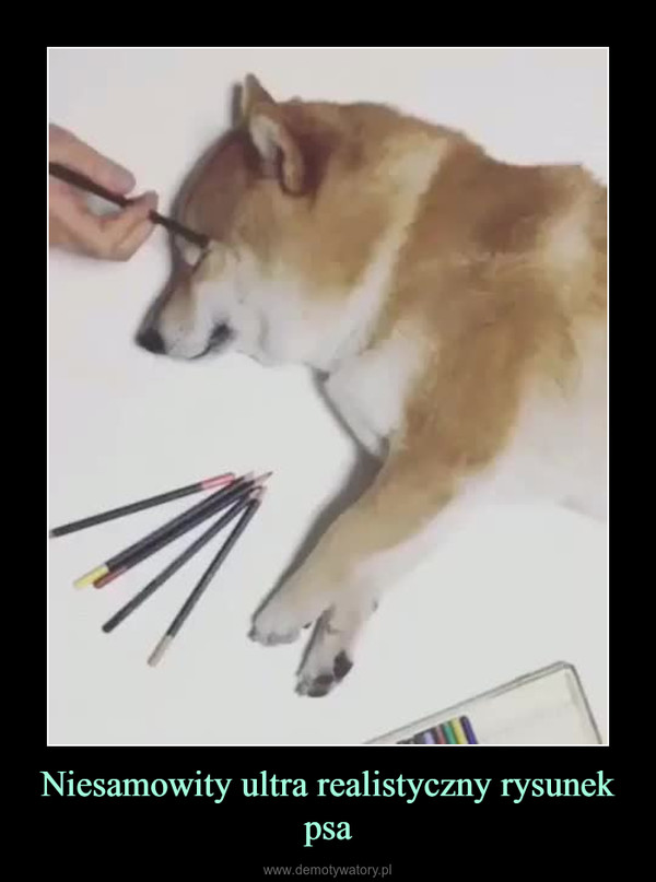 Niesamowity ultra realistyczny rysunek psa –