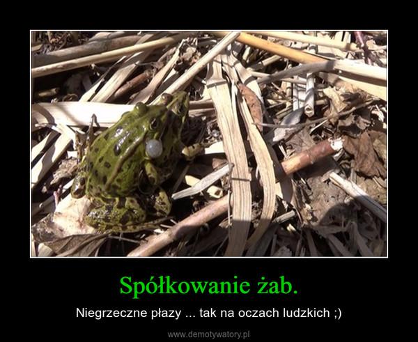 Spółkowanie żab. – Niegrzeczne płazy ... tak na oczach ludzkich ;)