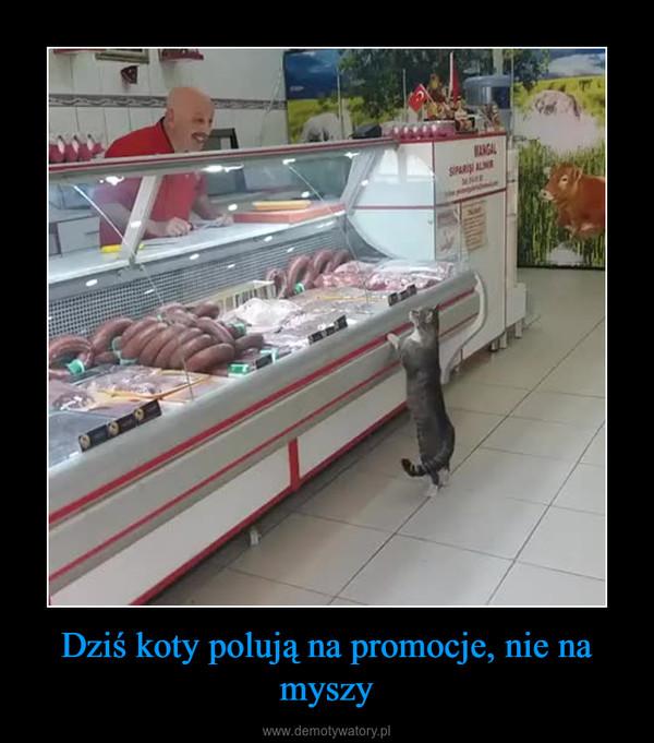 Dziś koty polują na promocje, nie na myszy –