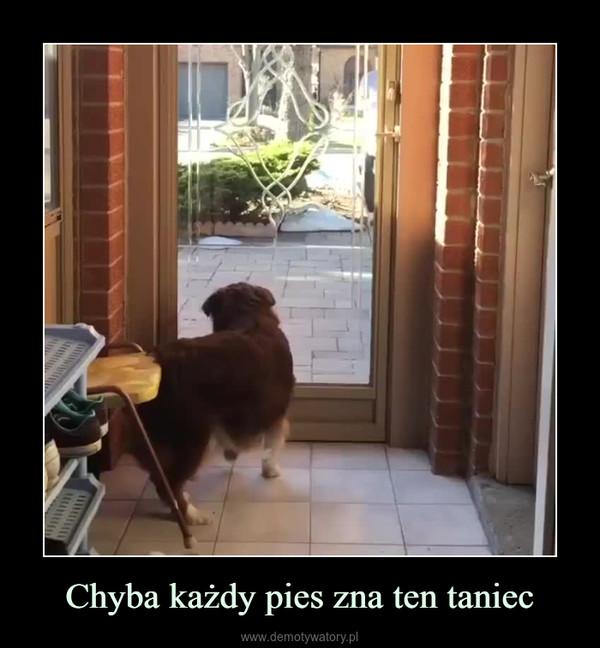 Chyba każdy pies zna ten taniec –