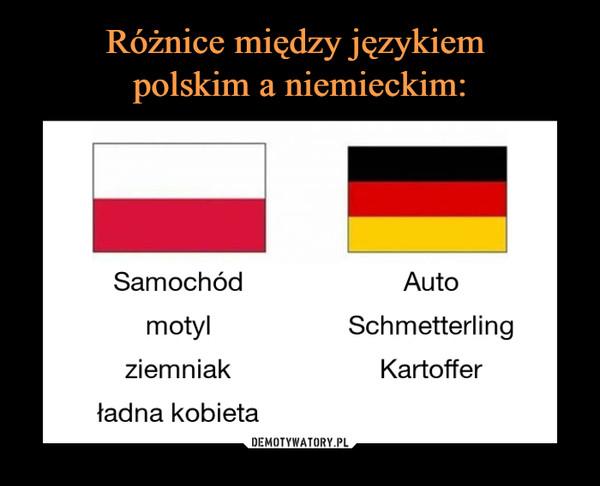 –  Samochód motyl ziemniak ładna kobieta Auto Schmetterling Kartoffer