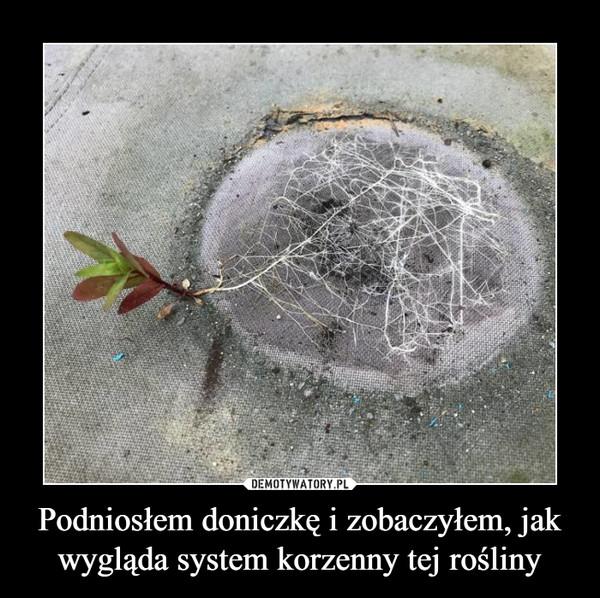 Podniosłem doniczkę i zobaczyłem, jak wygląda system korzenny tej rośliny –