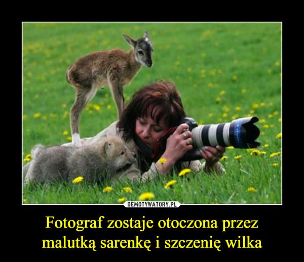 Fotograf zostaje otoczona przezmalutką sarenkę i szczenię wilka –