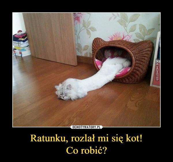 Ratunku, rozlał mi się kot!Co robić? –