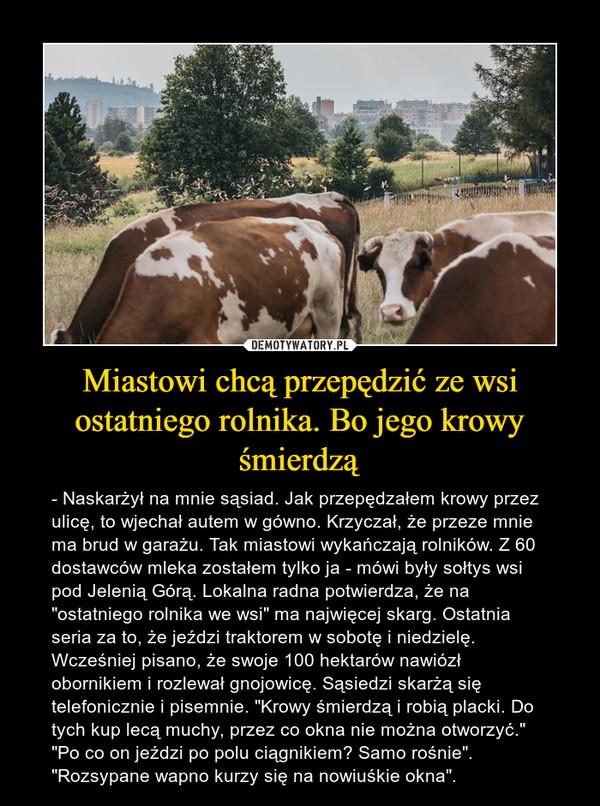 Miastowi chcą przepędzić ze wsi ostatniego rolnika. Bo jego krowy śmierdzą
