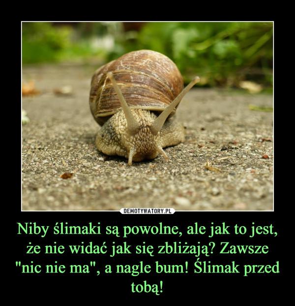 """Niby ślimaki są powolne, ale jak to jest, że nie widać jak się zbliżają? Zawsze """"nic nie ma"""", a nagle bum! Ślimak przed tobą! –"""