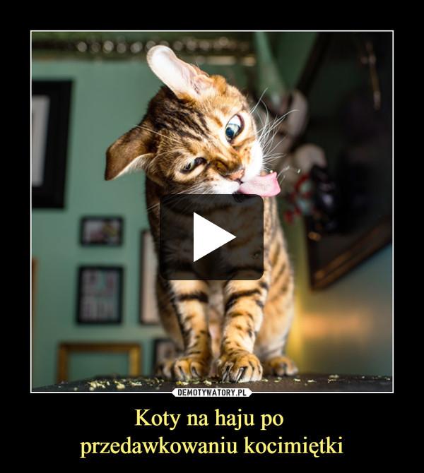 Koty na haju po przedawkowaniu kocimiętki –