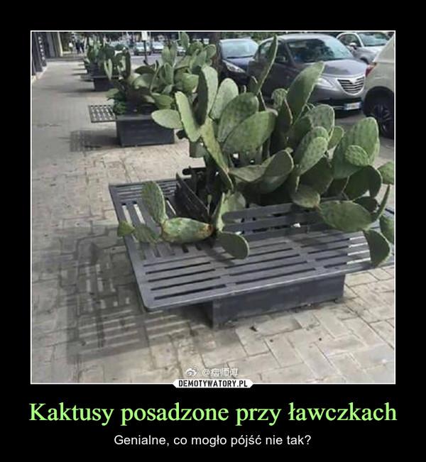 Kaktusy posadzone przy ławczkach – Genialne, co mogło pójść nie tak?