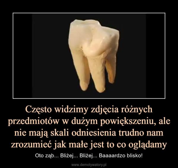 Często widzimy zdjęcia różnych przedmiotów w dużym powiększeniu, ale nie mają skali odniesienia trudno nam zrozumieć jak małe jest to co oglądamy – Oto ząb... Bliżej... Bliżej... Baaaardzo blisko!