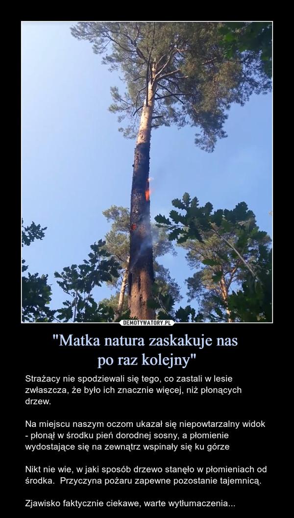 """""""Matka natura zaskakuje nas po raz kolejny"""" – Strażacy nie spodziewali się tego, co zastali w lesie zwłaszcza, że było ich znacznie więcej, niż płonących drzew.Na miejscu naszym oczom ukazał się niepowtarzalny widok - płonął w środku pień dorodnej sosny, a płomienie wydostające się na zewnątrz wspinały się ku górzeNikt nie wie, w jaki sposób drzewo stanęło w płomieniach od środka.  Przyczyna pożaru zapewne pozostanie tajemnicą.Zjawisko faktycznie ciekawe, warte wytłumaczenia..."""