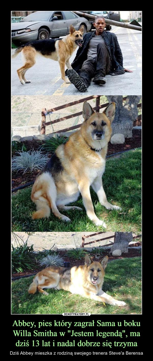 """Abbey, pies który zagrał Sama u boku Willa Smitha w """"Jestem legendą"""", ma dziś 13 lat i nadal dobrze się trzyma – Dziś Abbey mieszka z rodziną swojego trenera Steve'a Berensa"""