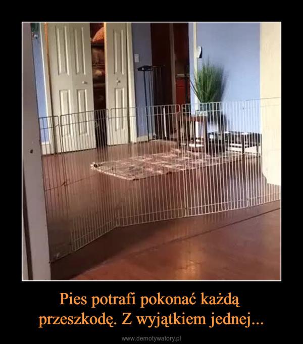 Pies potrafi pokonać każdą przeszkodę. Z wyjątkiem jednej... –