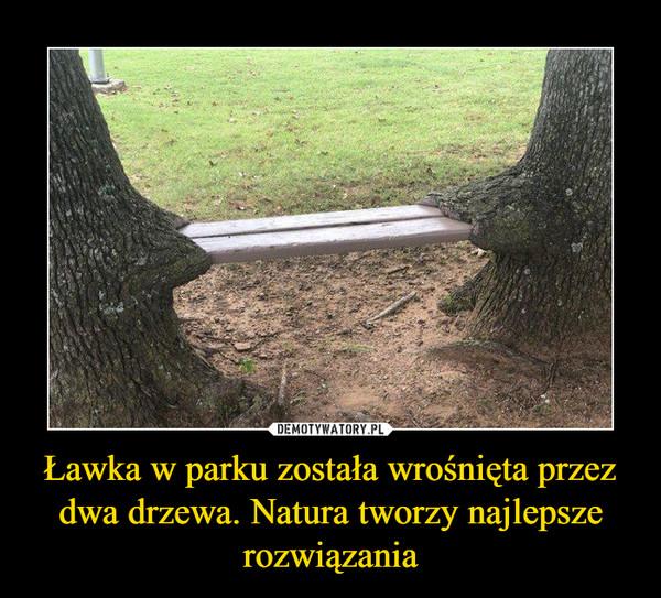 Ławka w parku została wrośnięta przez dwa drzewa. Natura tworzy najlepsze rozwiązania –