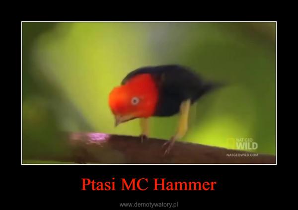 Ptasi MC Hammer –