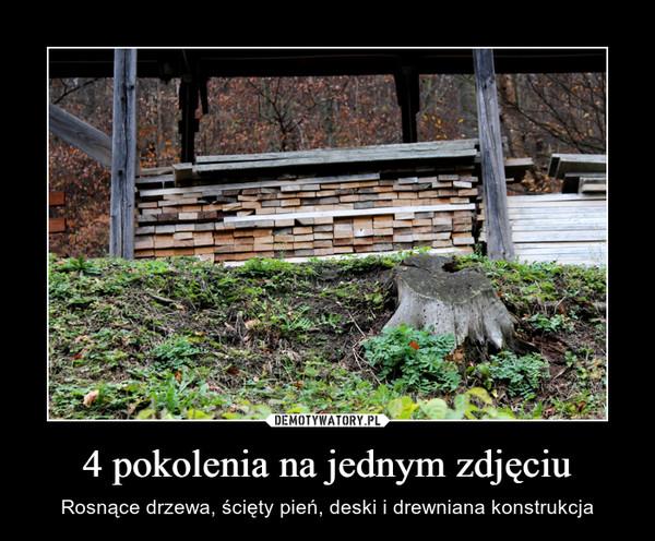 4 pokolenia na jednym zdjęciu – Rosnące drzewa, ścięty pień, deski i drewniana konstrukcja