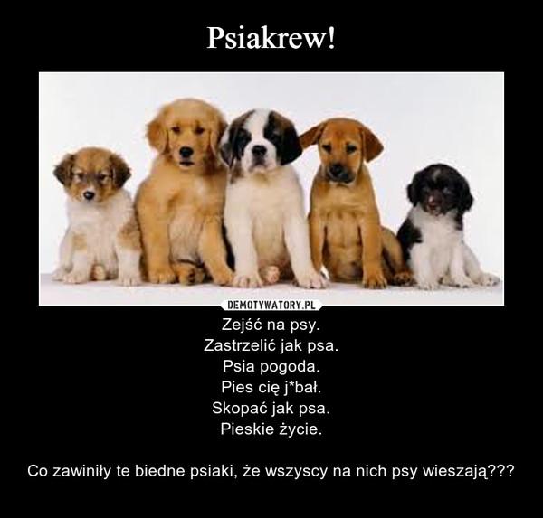 – Zejść na psy.Zastrzelić jak psa.Psia pogoda.Pies cię j*bał.Skopać jak psa.Pieskie życie.Co zawiniły te biedne psiaki, że wszyscy na nich psy wieszają???