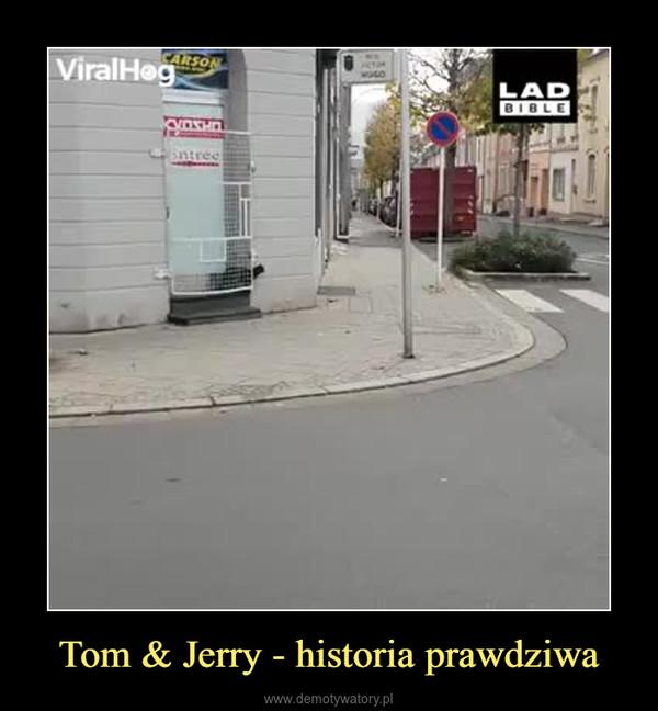 Tom & Jerry - historia prawdziwa –