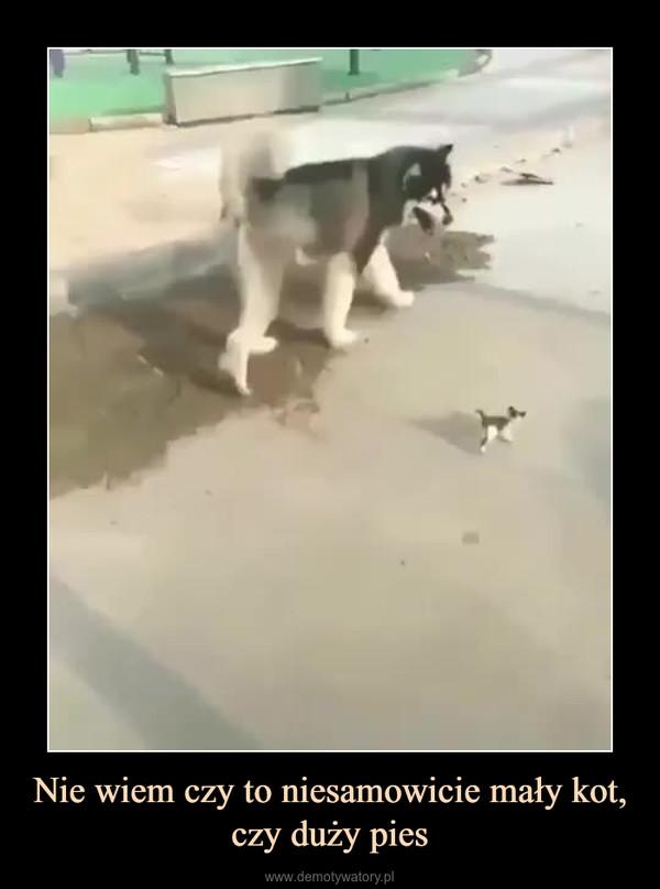 Nie wiem czy to niesamowicie mały kot, czy duży pies –