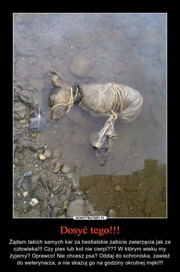 Dosyć tego!!! – Żądam takich samych kar za bestialskie zabicie zwierzęcia jak za człowieka!!! Czy pies lub kot nie cierpi??? W którym wieku my żyjemy? Oprawco! Nie chcesz psa? Oddaj do schroniska, zawieź do weterynarza, a nie skazuj go na godziny okrutnej męki!!!