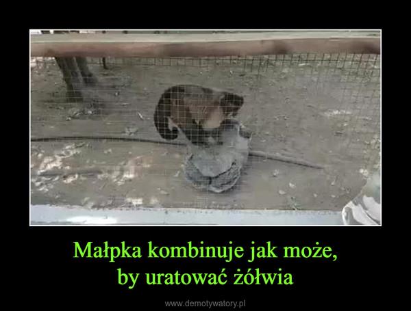 Małpka kombinuje jak może,by uratować żółwia –