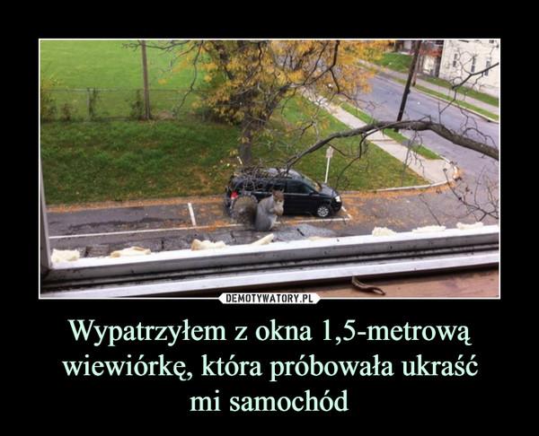 Wypatrzyłem z okna 1,5-metrową wiewiórkę, która próbowała ukraśćmi samochód –