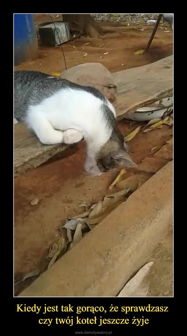 Kiedy jest tak gorąco, że sprawdzasz czy twój koteł jeszcze żyje –