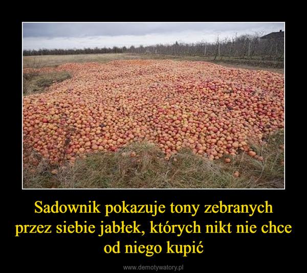 Sadownik pokazuje tony zebranych przez siebie jabłek, których nikt nie chce od niego kupić –