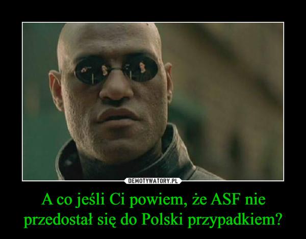 A co jeśli Ci powiem, że ASF nie przedostał się do Polski przypadkiem? –