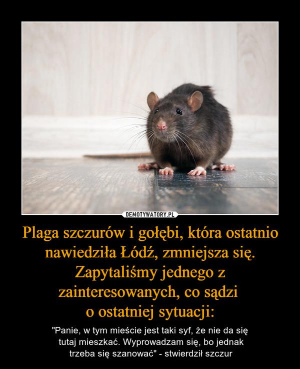 Znalezione obrazy dla zapytania z Łodzi szczur demoty
