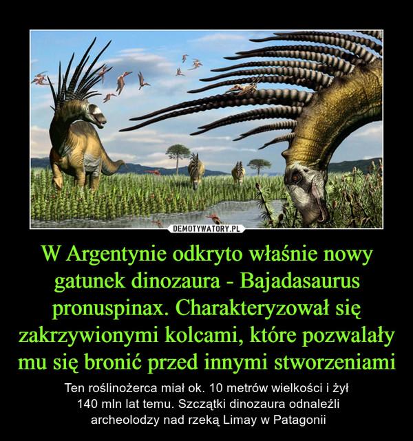 W Argentynie odkryto właśnie nowy gatunek dinozaura - Bajadasaurus pronuspinax. Charakteryzował się zakrzywionymi kolcami, które pozwalały mu się bronić przed innymi stworzeniami – Ten roślinożerca miał ok. 10 metrów wielkości i żył 140 mln lat temu. Szczątki dinozaura odnaleźli archeolodzy nad rzeką Limay w Patagonii