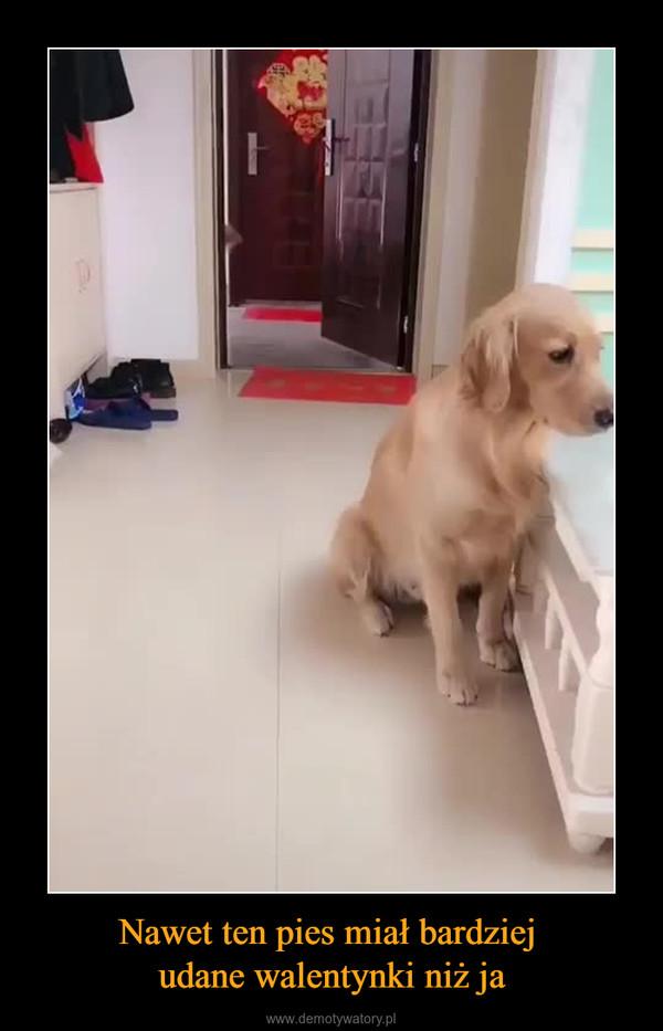 Nawet ten pies miał bardziej udane walentynki niż ja –