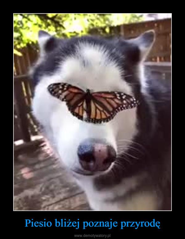 Piesio bliżej poznaje przyrodę –