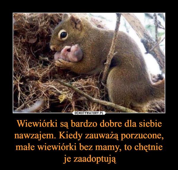 Wiewiórki są bardzo dobre dla siebie nawzajem. Kiedy zauważą porzucone, małe wiewiórki bez mamy, to chętnie je zaadoptują –