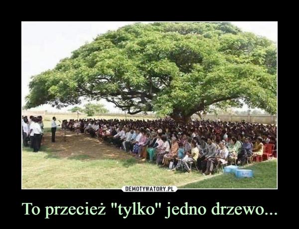 """To przecież """"tylko'' jedno drzewo... –"""