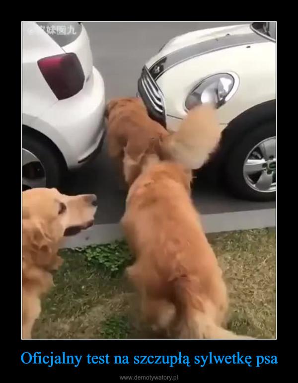 Oficjalny test na szczupłą sylwetkę psa –