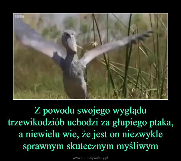 Z powodu swojego wyglądu trzewikodziób uchodzi za głupiego ptaka, a niewielu wie, że jest on niezwykle sprawnym skutecznym myśliwym –