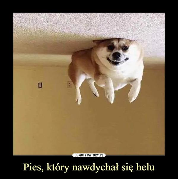 Pies, który nawdychał się helu –