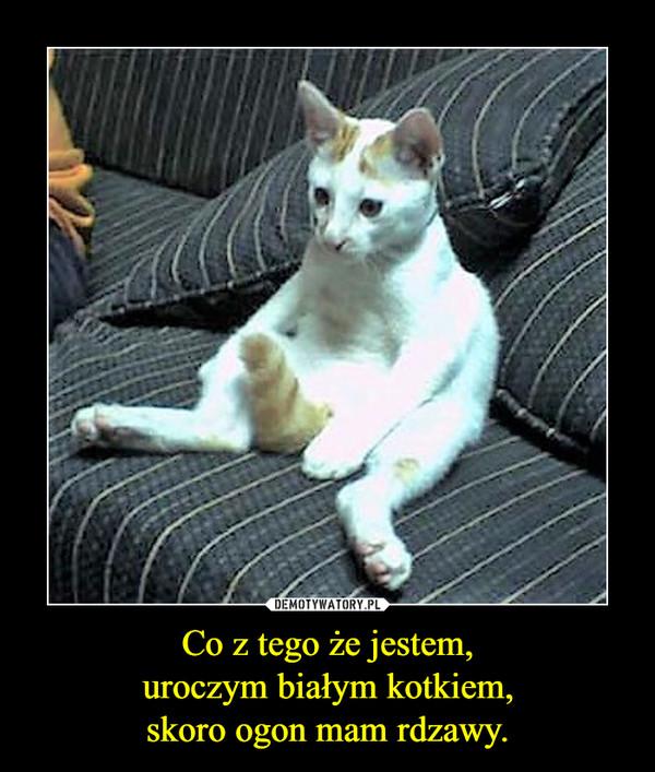 Co z tego że jestem,uroczym białym kotkiem,skoro ogon mam rdzawy. –