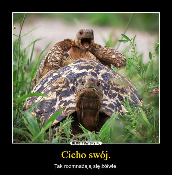 Cicho swój. – Tak rozmnażają się żółwie.