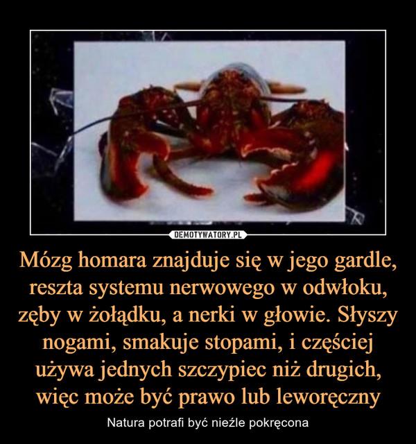 Mózg homara znajduje się w jego gardle, reszta systemu nerwowego w odwłoku, zęby w żołądku, a nerki w głowie. Słyszy nogami, smakuje stopami, i częściej używa jednych szczypiec niż drugich, więc może być prawo lub leworęczny – Natura potrafi być nieźle pokręcona