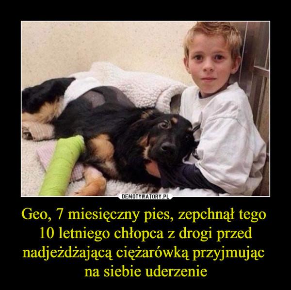 Geo, 7 miesięczny pies, zepchnął tego 10 letniego chłopca z drogi przed nadjeżdżającą ciężarówką przyjmując na siebie uderzenie –