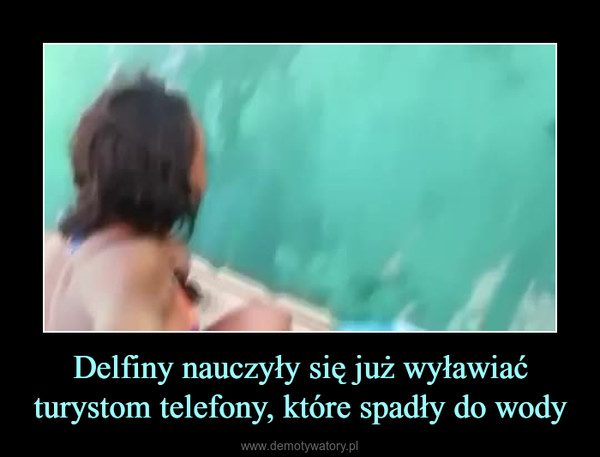 Delfiny nauczyły się już wyławiać turystom telefony, które spadły do wody –