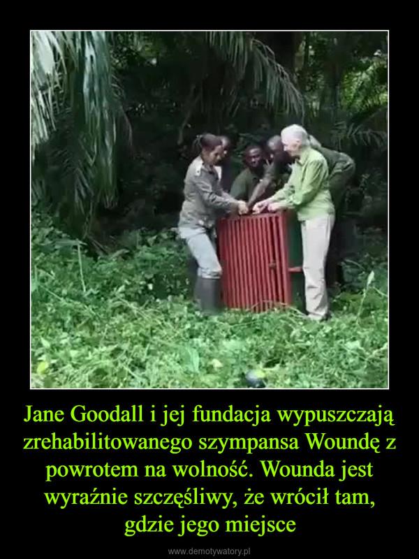 Jane Goodall i jej fundacja wypuszczają zrehabilitowanego szympansa Woundę z powrotem na wolność. Wounda jest wyraźnie szczęśliwy, że wrócił tam, gdzie jego miejsce –