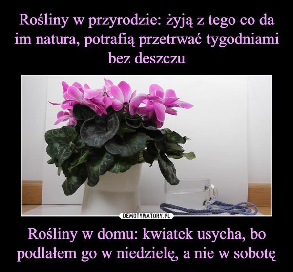 Rośliny w domu: kwiatek usycha, bo podlałem go w niedzielę, a nie w sobotę –