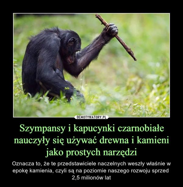 Szympansy i kapucynki czarnobiałe nauczyły się używać drewna i kamieni jako prostych narzędzi – Oznacza to, że te przedstawiciele naczelnych weszły właśnie w epokę kamienia, czyli są na poziomie naszego rozwoju sprzed 2,5 milionów lat