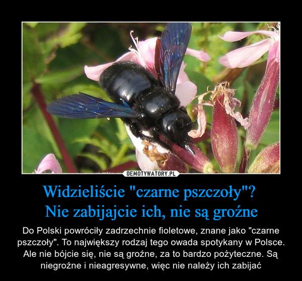 """Widzieliście """"czarne pszczoły""""? Nie zabijajcie ich, nie są groźne – Do Polski powróciły zadrzechnie fioletowe, znane jako """"czarne pszczoły"""". To największy rodzaj tego owada spotykany w Polsce. Ale nie bójcie się, nie są groźne, za to bardzo pożyteczne. Są niegroźne i nieagresywne, więc nie należy ich zabijać"""